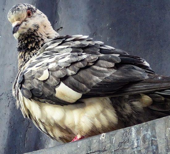 Zabezpiecz obiekt lub dom przed ptakami