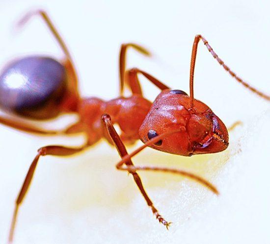 Jak się pozbyć mrówek
