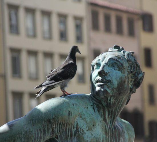 Jak odstraszyć ptaki